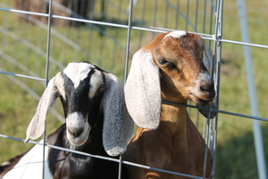 Petting Zoo fundraiser