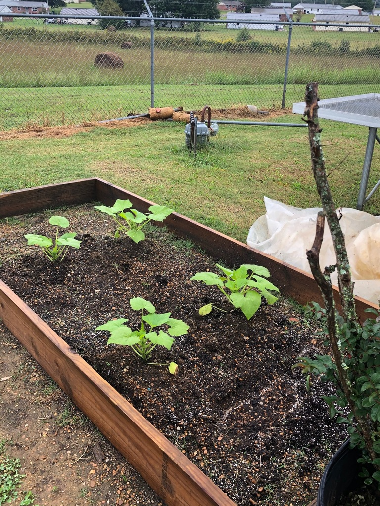 Raised Bed Project in Ag Natural