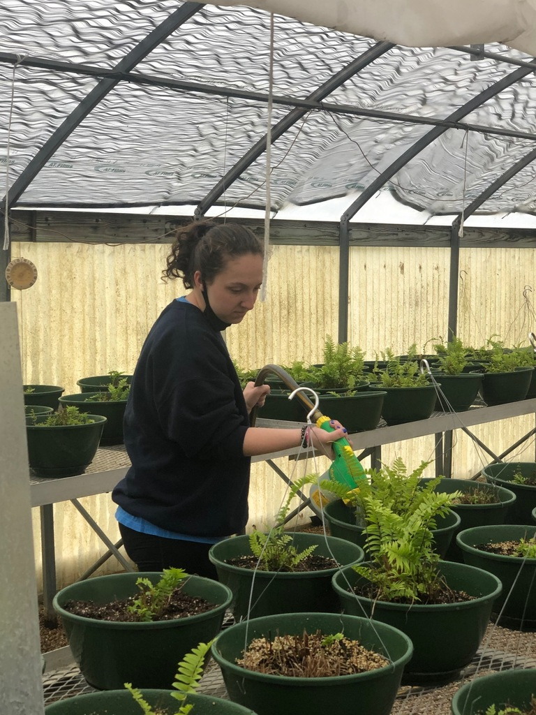 Watering Ferns for the Spring Fundraiser