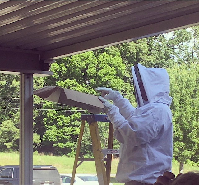 Mr. Russ Elam relocating some bees at ACTC